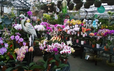 "Telly's Greenhouse in Troy:  40 Years and Still ""Growing"""